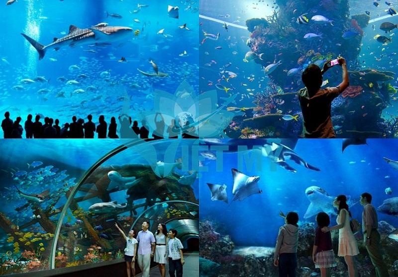 Thuy cung S.E.A Aquarium